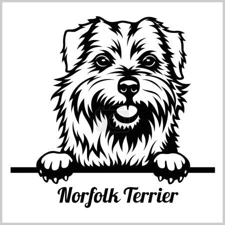Norfolk Terrier - Peeking Dogs - breed face head i...