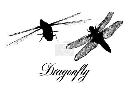 die Silhouette einer Libelle. Vektorillustration