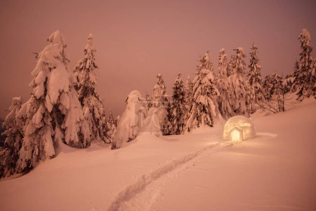 Night winter landscape with Eskimo igloo. Spruce forest in the snow