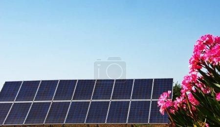 Foto de Paneles solares en el cielo azul con ramo de flores rosadas - Imagen libre de derechos