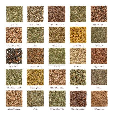 Photo pour Grande collection d'herbes utilisées en phytothérapie naturelle alternative avec des feuilles séchées, des fleurs, des racines et de l'écorce en formes carrées isolées sur fond blanc avec des titres . - image libre de droit