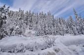 """Постер, картина, фотообои """"Горный пейзаж с елок, покрытые снегом в дневное время"""""""