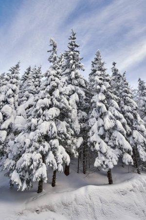 Foto de Paisaje de montaña con abetos cubiertos de nieve durante el día - Imagen libre de derechos