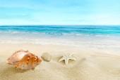Sea shells on the beach. Splashing waves on the seashore.