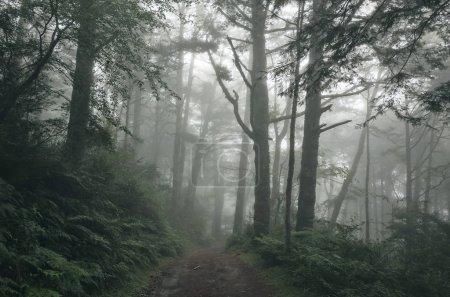 Photo pour Paysage de forêt avec brume et personne sur le chemin - image libre de droit