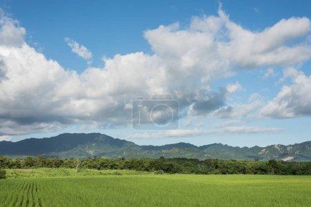 Foto de Paisaje del paisaje de granja de paddy verde durante el día - Imagen libre de derechos