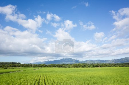 Photo for Landscape of green paddy farm at countryside - Royalty Free Image