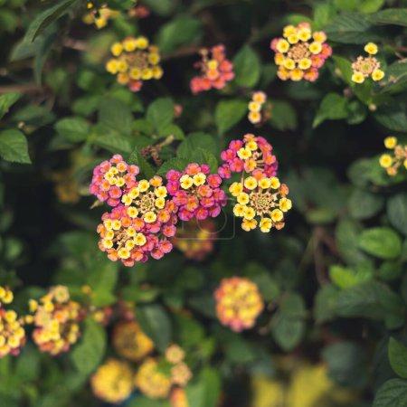 Photo pour Fond de fleurs avec une faible profondeur de champ - image libre de droit