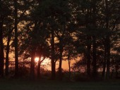 Sunset over the forest
