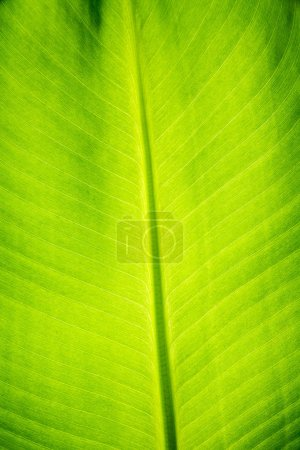 Foto de Green palm leaf macro view. Nature wallpaper - Imagen libre de derechos