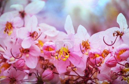 Exotic flowers in Tropical garden