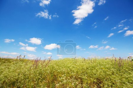 summer meadow nature landscape