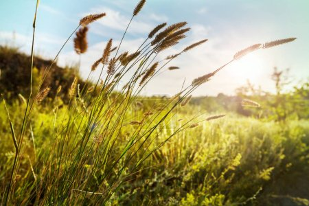 Sunny day on the meadow nature landscape