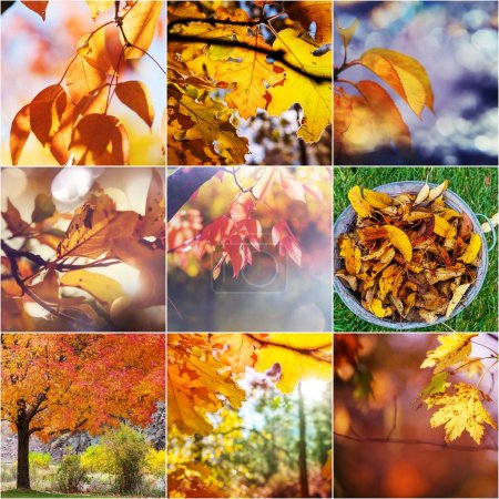 Photo for Orange and Yellow Autumn collage - Royalty Free Image