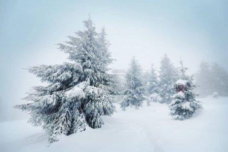 Photo pour Magnifique forêt enneigée en hiver. Bon pour Christmas background. - image libre de droit
