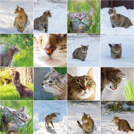 Photo pour Collage d'un chat, thèmes animaux - image libre de droit