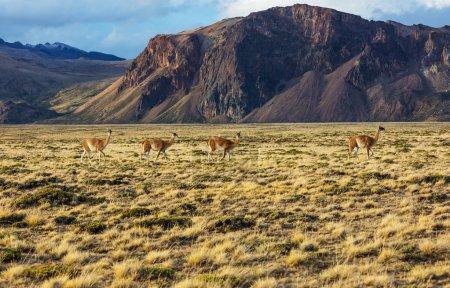 Photo pour Parc national Perito Moreno, Patagonie, Argentine - image libre de droit