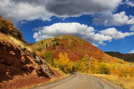 Photo for Colorful yellow autumn in Colorado, United States. Fall season. - Royalty Free Image