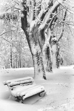 Foto de Paisaje de invierno - nieve invierno árboles en clima nublado. Escena tranquila naturaleza del invierno, invierno de árboles cubiertos de nieve en el bosque de invierno - Imagen libre de derechos