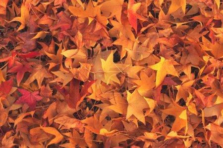 Photo pour Feuilles d'automne jaunes sur route asphaltée, vue de dessus du fond de la saison d'automne - image libre de droit