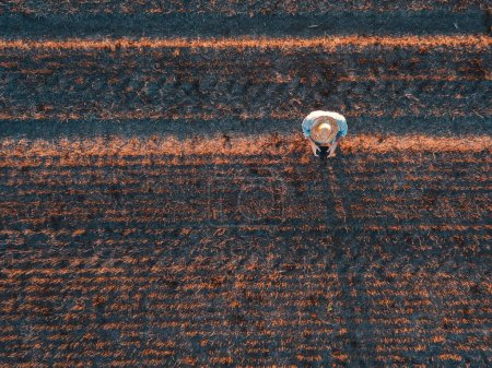 Photo for Top view of male farmer flying a drone with remote control in harvested wheat stubble field in summer sunset - Royalty Free Image