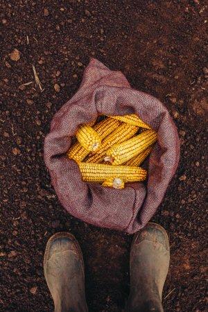 Photo pour Fermier debout directement au-dessus des épis de maïs récoltés dans un sac en toile de jute, vue du dessus des pieds en bottes en caoutchouc - image libre de droit
