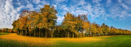 Photo for Yellow leaf fall on green grass, meadow in autumn park, panorama. Trees with colorful foliage, nobody. Nature landscape in sunny day - Royalty Free Image