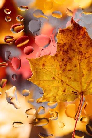 Foto de Fondo de otoño con hojas de arce y gotas de agua de lluvia. - Imagen libre de derechos