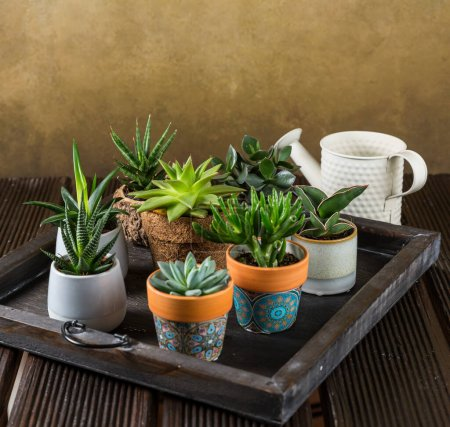 Photo for Green house plants potted on the wooden table. Succulents indoor. Concept of home garden. - Royalty Free Image