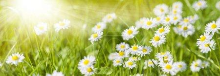 Photo pour Bannière grand angle avec fleurs fleuries sur prairie - image libre de droit