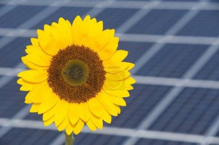Foto de Paneles solares para energías renovables con girasol simbólico - Imagen libre de derechos