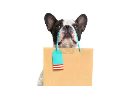 Photo for French bulldog with the shopping bag - Royalty Free Image