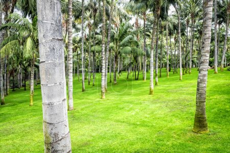 Photo for Green palm trees in garden, Tenerife - Royalty Free Image