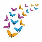 group of beautiful butterflies flying