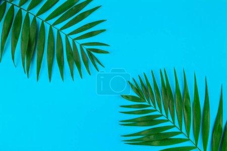 Photo pour Créatif plat vue du dessus des feuilles de palmier tropical vert sur fond de papier de couleur avec espace de copie. Modèle de concept estival minimaliste de plantes tropicales de palmier pour votre texte ou votre conception - image libre de droit