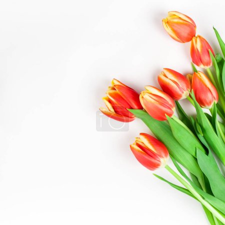 Photo for Square Creative flat lay top view welcome spring greeting card with red tulips flowers on white background with copy space. Celebration Postcard template - Royalty Free Image