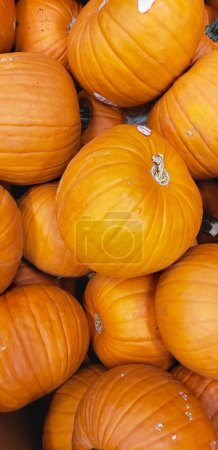 Photo for Abstract Several Pumpkin Patch Background. - Royalty Free Image