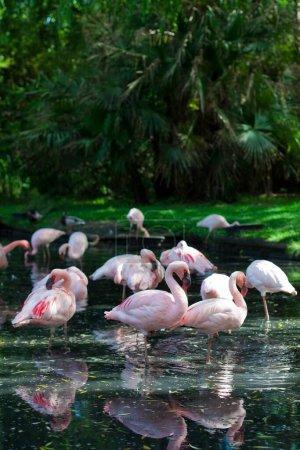 Photo for Close up of of flamingos at a small lake - Royalty Free Image