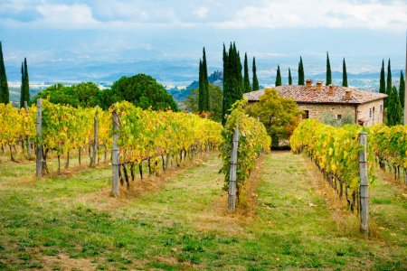 Vineyard and farm in Chianti overlooking Montaio and Valdarno in autumn, Tuscany, Italy