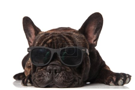 Photo pour Adorable bouledogue français avec des lunettes de soleil couché sur fond blanc - image libre de droit