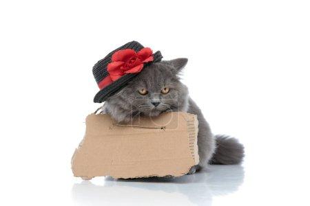 Photo pour Sans-abri britannique chat à poil long avec fourrure grise, planche et chapeau couché ennuyé sur fond de studio blanc - image libre de droit