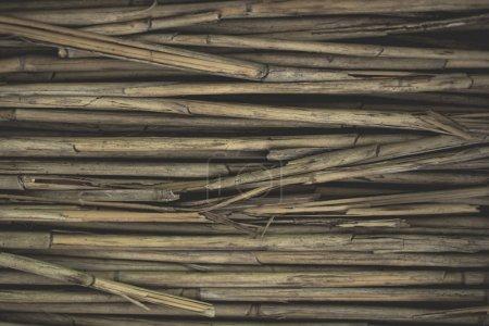 sec jaune tiges de bambou fond