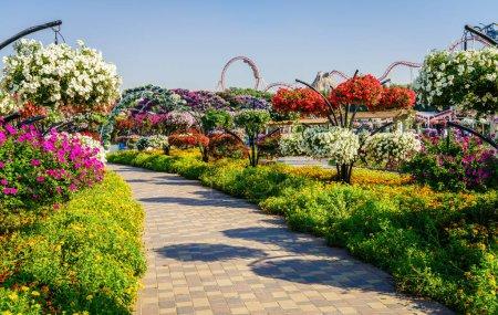 Photo pour Dubaï, EAU - 12 décembre 2016 : Miracle Garden, l'une des principales attractions touristiques . - image libre de droit