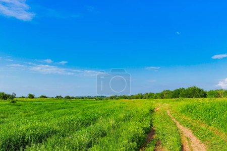 Photo for A dirt road leading past a field on a summer day - Royalty Free Image