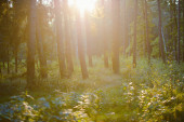 Vintage forest background. Nature background. Spring time