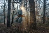 Fall in the park. Misty treeswith sun rays