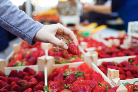 Close-up of a woman picking a strawberry from the boxes of strawberries from the street market.