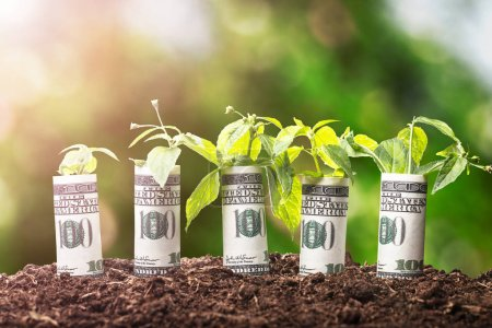 Photo for Saplings Covered With Rolled Up American Banknotes On Soil - Royalty Free Image