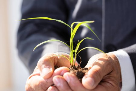 Photo for Close-up Of A Businessman Holding Sapling In His Hands - Royalty Free Image