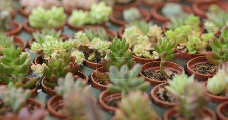 Photo pour Plantes succulentes vertes en pots - image libre de droit